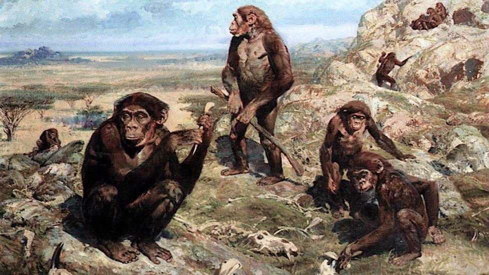 Görsel: Zdenek Burian / Australopithecus africanus illüstrasyonu